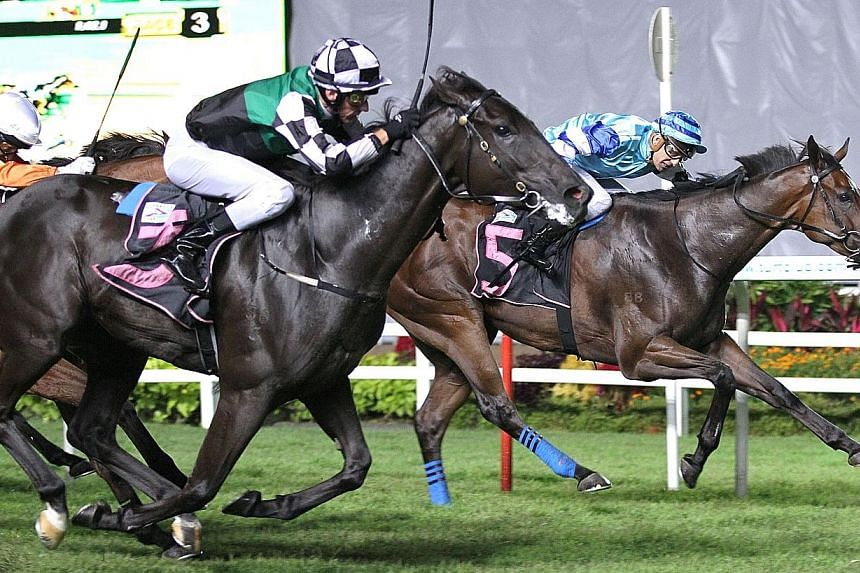 Mr Exchequer (No. 3) getting up in the last few strides to beat Sahara Eagle in Race 3 last night.