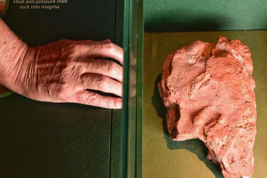 A rounded claw print, measuring about 2cm in length, was found in red mudstone at Sentosa's Tanjong Rimau rocky outcrop, located under Fort Siloso.