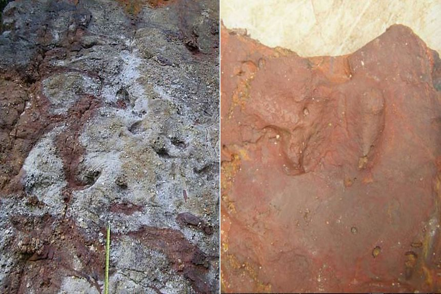Possible dinosaur footprints found in rocks on a shore habitat on the resort Island of Sentosa.