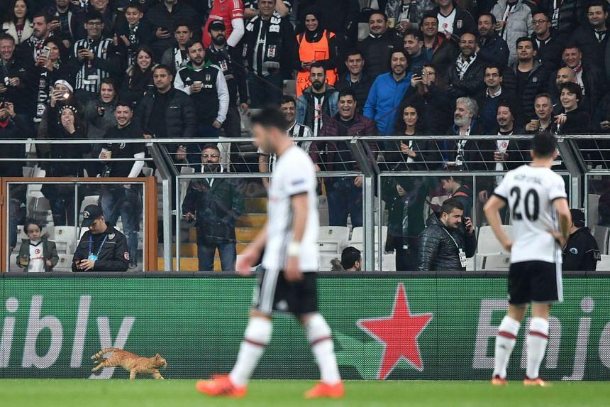 A cat runs on the pitch during the second leg of the Besiktas versus Bayern Munich match.