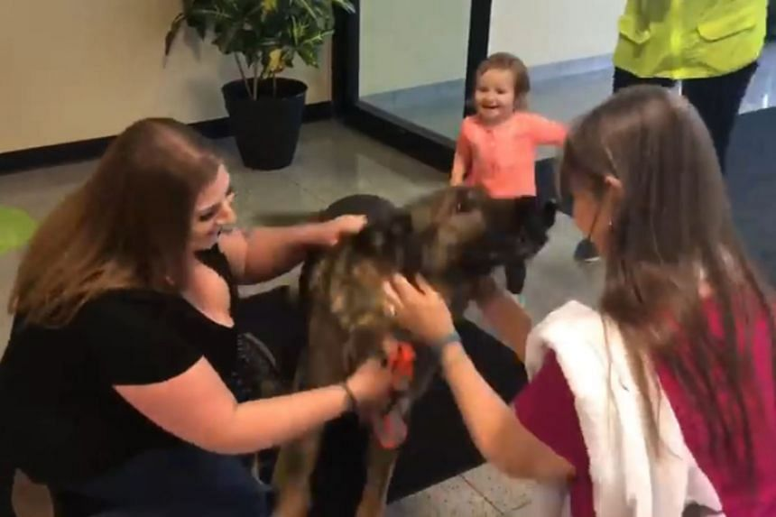 German Shepherd Irgo was reunited with its owner Kara Swindle on March 16, 2018, three days after it was supposed to arrive at Kansas City International Airport.