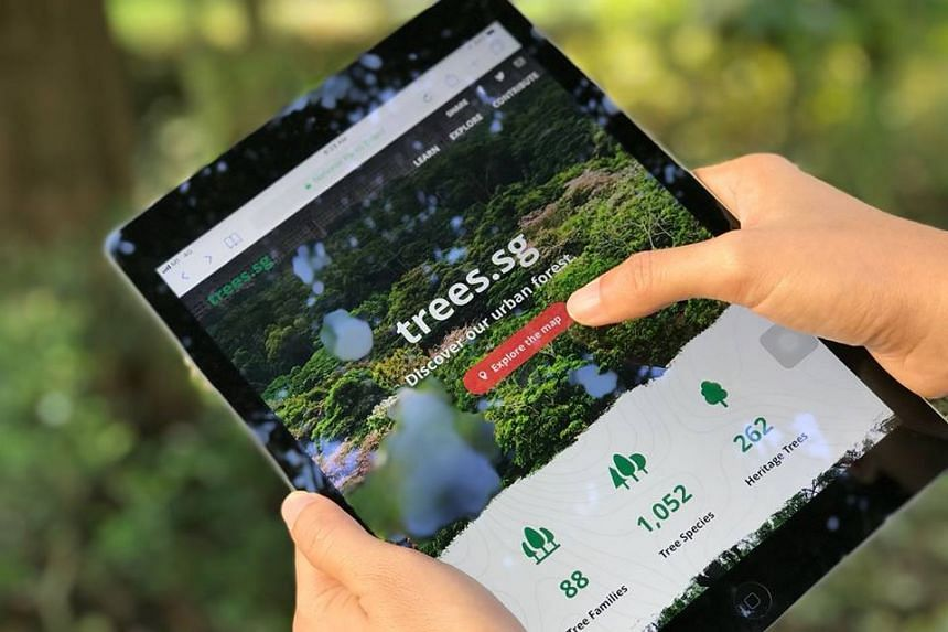 The National Parks Board (NParks) has launched trees.sg, an online map that shows the locations of more than 500,000 trees in Singapore's urban landscape.