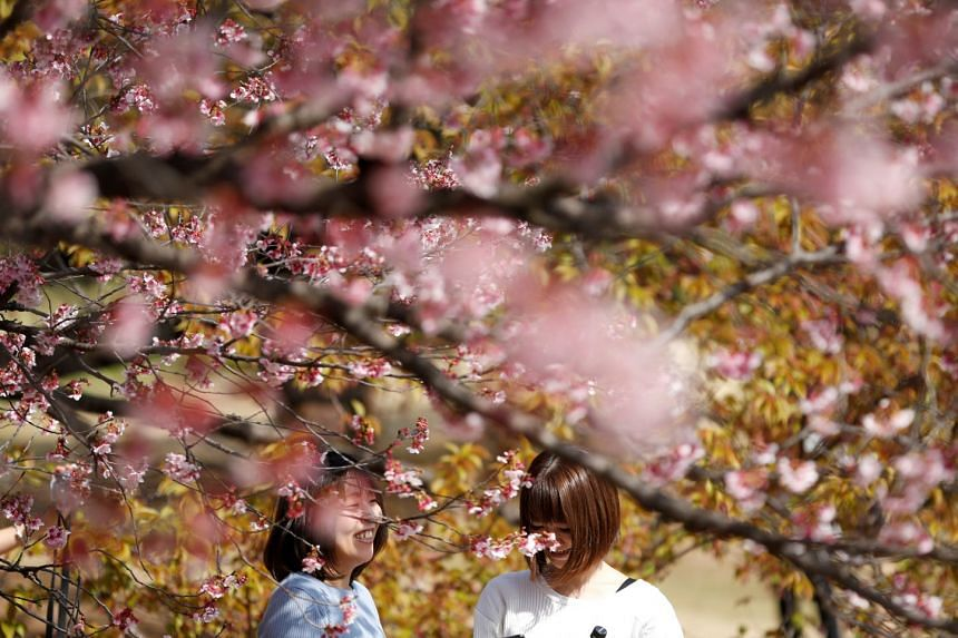 Visitors look at early flowering Kanzakura cherry blossoms in full bloom at the Shinjuku Gyoen National Garden in Tokyo, Japan, on March 14, 2018.