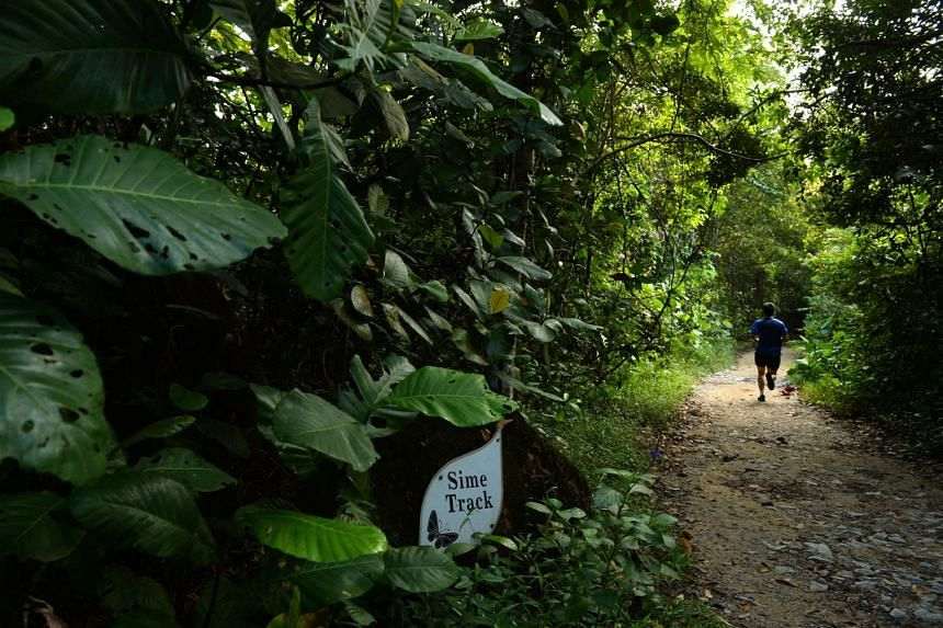 A jogger running along the Sime Track in the Central Catchment Nature Reserve. LTA said they will release their findings on the environmental impact of the site investigation works in the reserve, which hosts Singapore's largest trove of wildlife.
