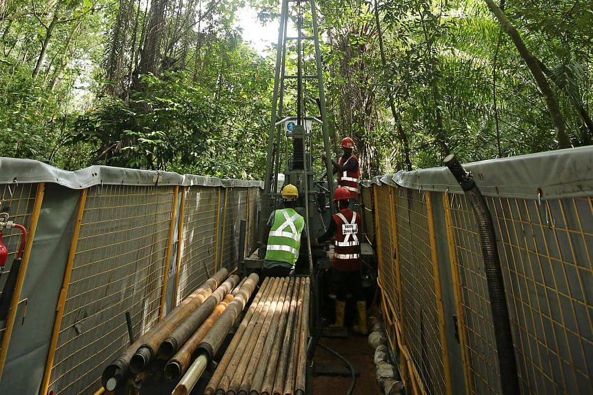 Site investigation works being carried out at the Central Catchment Nature Reserve for the Cross Island MRT line.