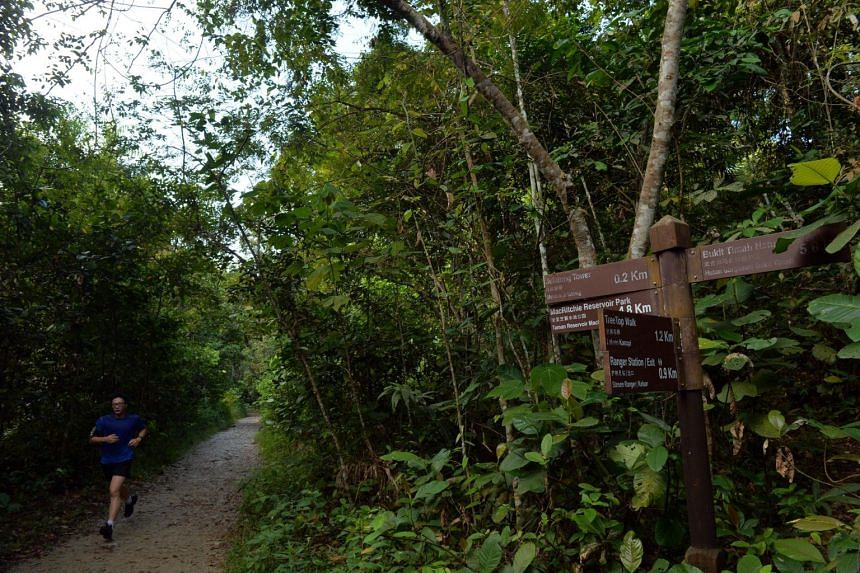 A runner along the Sime trail in the Central Catchment Nature Reserve.