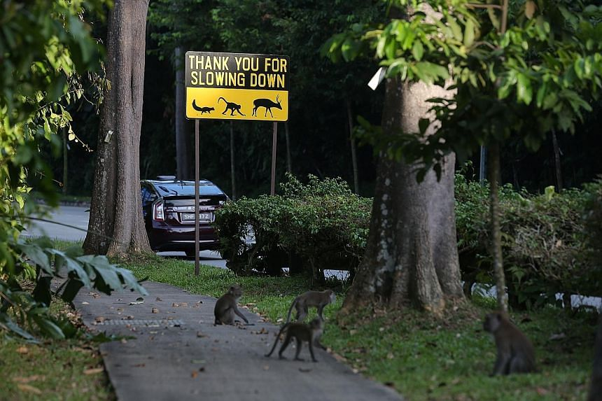A sign in Mandai Lake Road warning drivers about animals crossing the road. The Rainforest Park and relocated Bird Park are being built in Mandai.