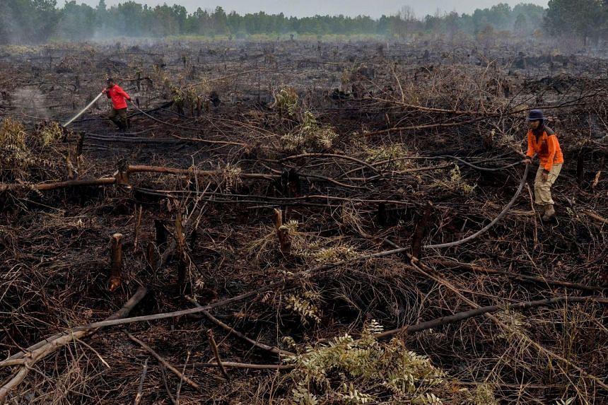 Firefighters exstinguish a peatland fire in Pekanbaru, Riau province, on Feb 1, 2018.