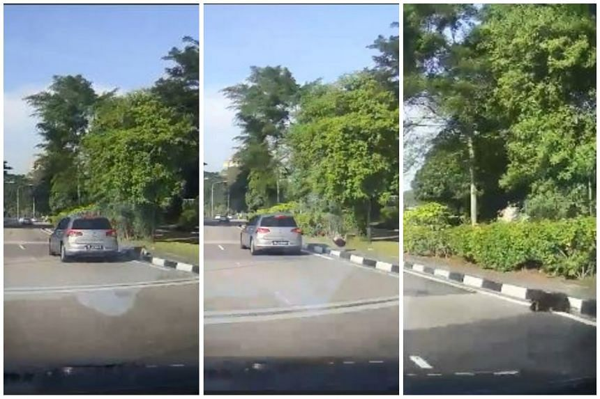 The video, caught on a dashboard camera, showed the car knocking over a dog that had dashed across the road.