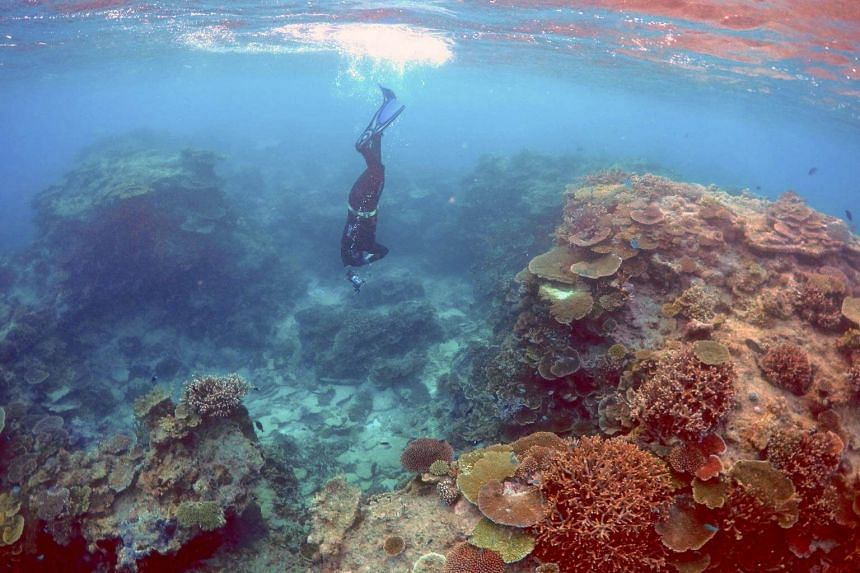 Mr Oliver Lanyon, Senior Ranger in the Great Barrier Reef region for the Queenlsand Parks and Wildlife Service, takes photographs and notes during an inspection of the reef's condition.