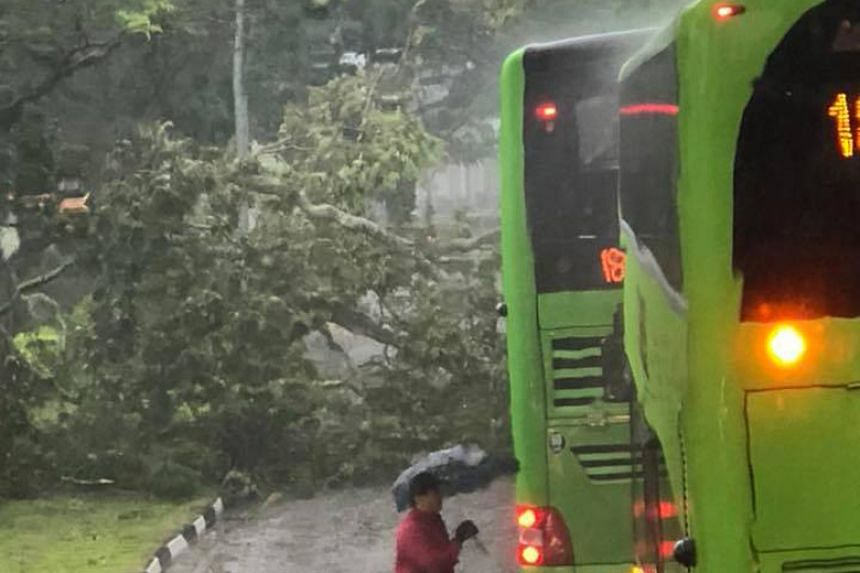A photo of the traffic situation in Bukit Batok was posted on the Singapore Taxi Driver Facebook group, showing a huge tree branch that had landed on the road in the path of two double-decker buses.