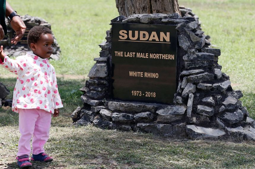 A child walks past the headstone of Sudan at the Rhino Cemetery at Ol Pejeta Conservancy.