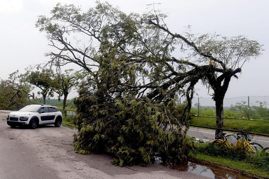 Uprooted trees and fallen branches blocking the way into the Muslim and Chinese cemeteries in Lim Chu Kang yesterday. Cars had to turn back as the road was not passable.