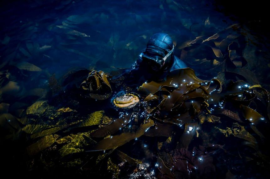 An abalone diver off Cape Town, South Africa on Feb 15, 2018.