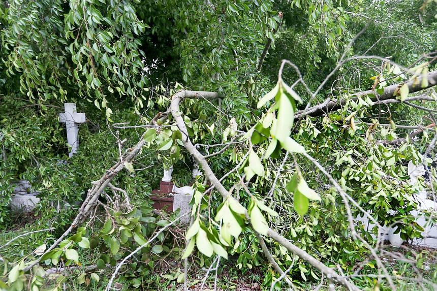 Strong winds during last Friday's thunderstorm uprooted trees at Choa Chu Kang Cemetery, damaging tombstones in the Muslim (above) and Christian (left) sections.