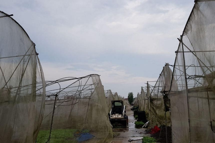 About 80 per cent of Quan Fa Organic Farm's greenhouses, which have metal frames covered with wire mesh, were left in need of repair following the wind and rain.