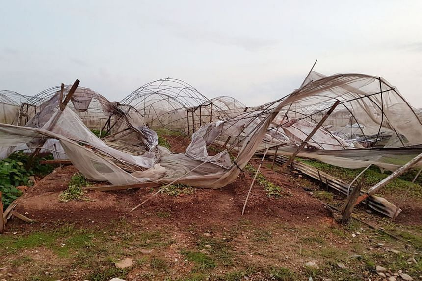 About 80 per cent of Quan Fa Organic Farm's greenhouses have been left in need of repair following Friday's storm.