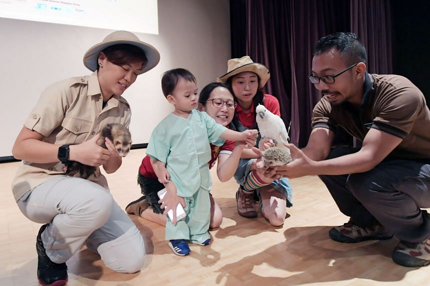 Nineteen-month-old Caiden De Silva and his mother, Isabelle Lim, 34, get up close with friendly animals such as Dash the ferret (held by ranger Kimberly Sim, far left); Girl Girl the sulphur crested cockatoo (held by Lee Jing Yi); and Toast the hedge