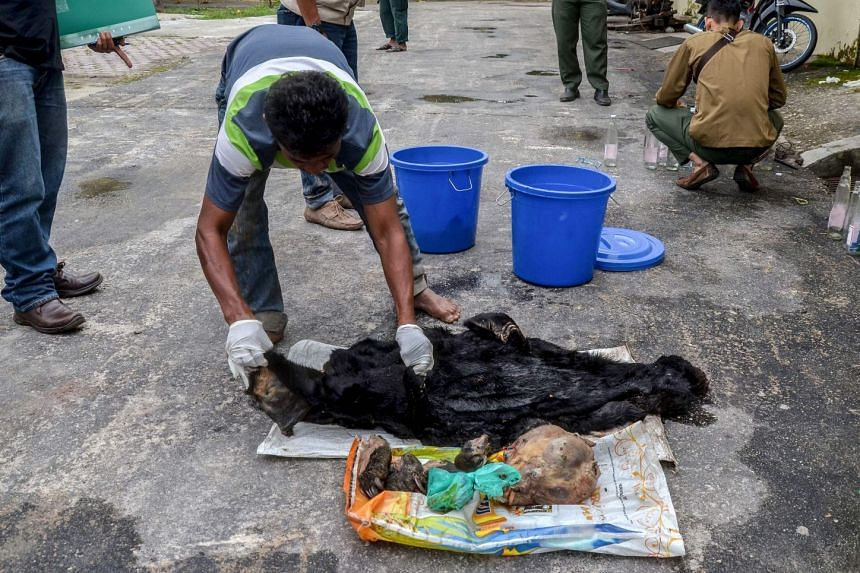 A suspect with the remains of a sun bear after being arrested in a village in Indonesia's Riau province yesterday. Police said the four suspects were caught after a video emerged showing them skinning and cooking four sun bears, which they slaughtere