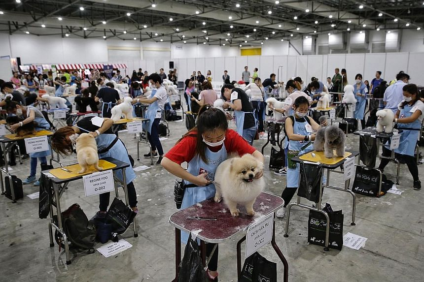 Pet shop assistant Chia Han Ru (in red), 24, trimming the fur of Charcoal the pomeranian during the 15th Singapore Kennel Club (SKC) Grooming Examination at PetExpo yesterday. Thirty-eight pet lovers took the exam, which is held about twice a year,