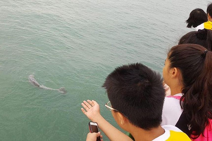A dolphin was reportedly entangled in a fishing line at the end of Bedok Jetty yesterday morning. The dolphin drifted away when the fisherman cut his line, said Mr Chia, an eyewitness.