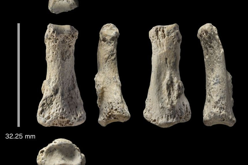 A fossilised human finger bone discovered in the desert of Saudi Arabia, pictured from various angles.
