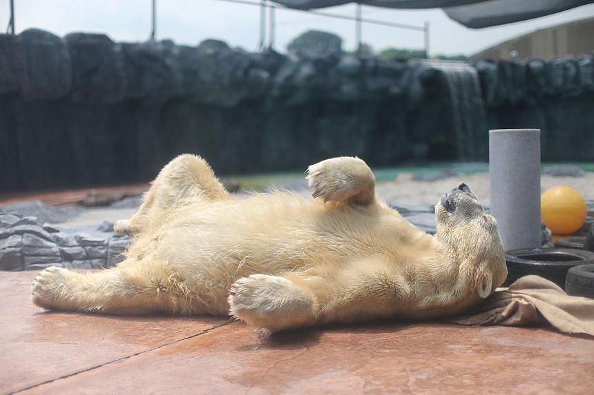 """In the past three months, Inuka's activity levels have dipped noticeably, the zoo said, adding that """"he now prefers resting to participating in daily interaction sessions with his keepers""""."""