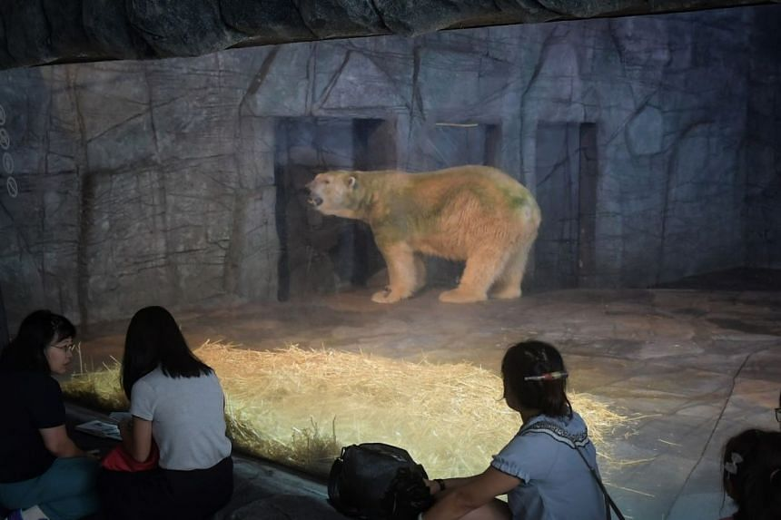 The Singapore Zoo said on April 13 that Inuka who was born at the zoo, is in declining health.