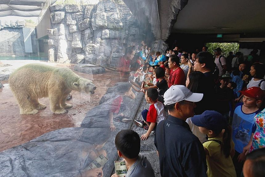 Crowds turned up to see Inuka yesterday after the zoo revealed on Thursday that the 27-year-old polar bear could be put down if its health continues to decline.