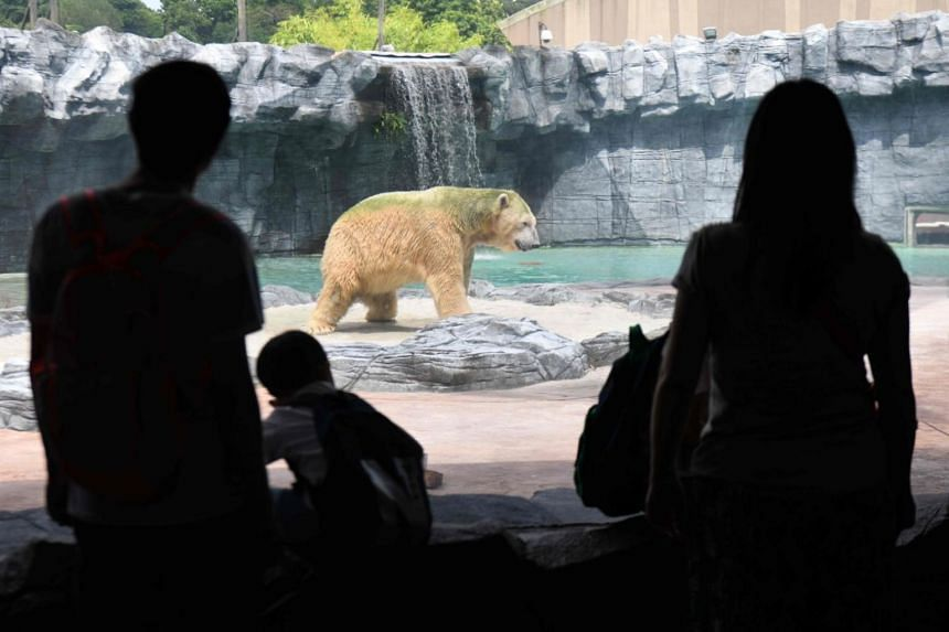 Inuka may well be Singapore's last polar bear, in light of the zoo's 2006 announcement that it would no longer bring anymore polar bears to an equatorial climate after discussions with its Animal Welfare and Ethics Committee.