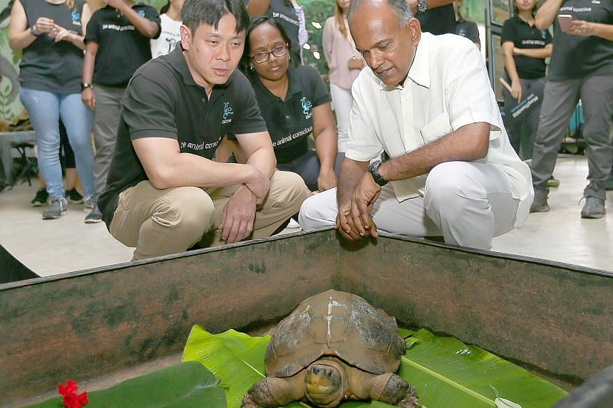 Acres founder and chief executive Louis Ng, who is also an MP for Nee Soon GRC, placing a rescued tortoise into a box for repatriation yesterday. Above: Law Minister K. Shanmugam at Acres' Wildlife Rescue Centre yesterday. With him are Mr Louis Ng an