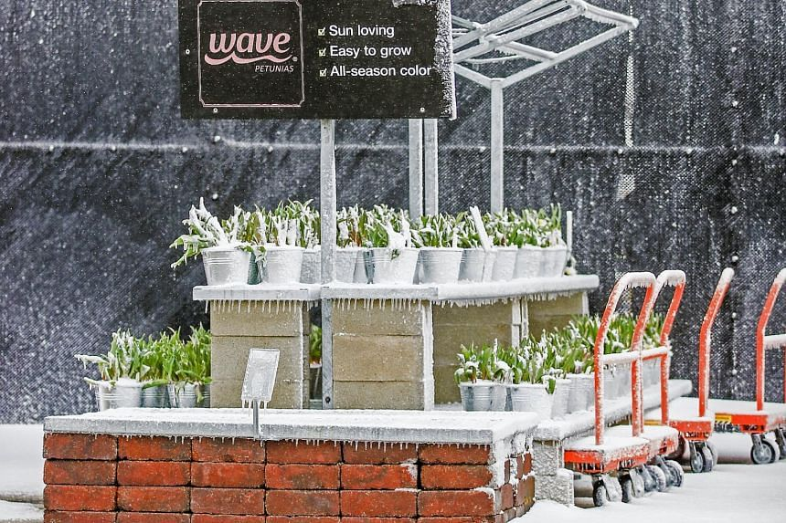 Ice and snow cover plants in a shop in Illinois as spring storms hit the US Midwest. The weather also led to flights being cancelled, while thousands of people were left without power.