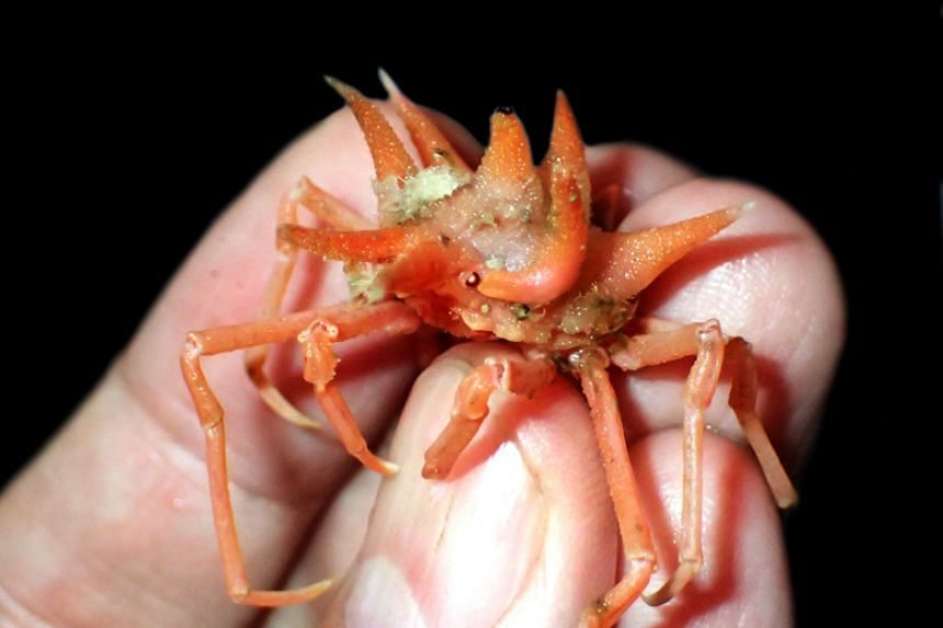 More than a dozen new species of crustaceans were discovered on the pioneering expedition into the deep waters off the southern coast of West Java.