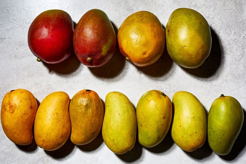A mango's colour may vary depending on the state of ripeness.