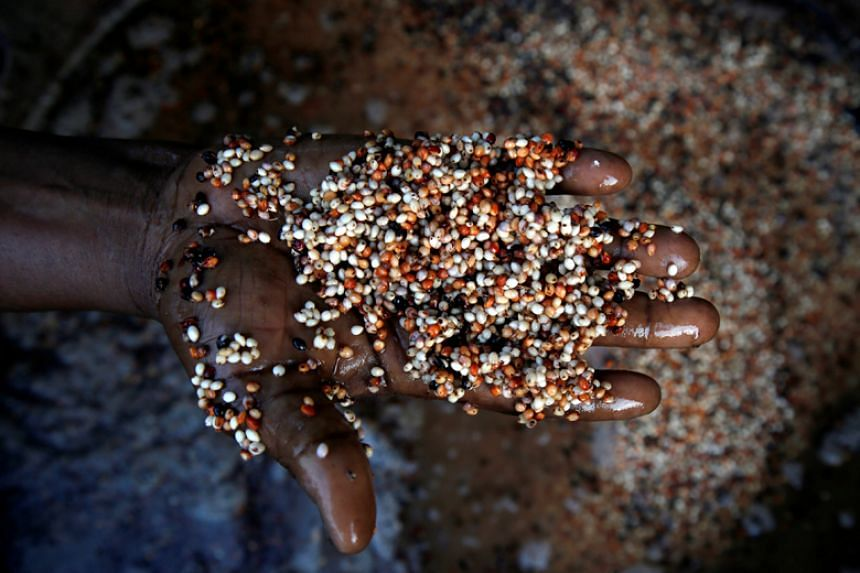 The sorghum measure was the result of a two-month investigation that concluded US sorghum was being dumped on the Chinese market.