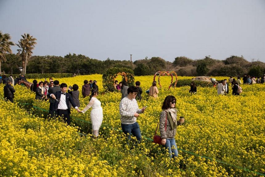 Tourists in a rapeseed field in Jeju, South Korea, on March 11, 2018. Jeju is among the places the South Korean government is highlighting in its tourism campaign.