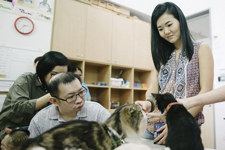 Financial consultant Camellia Abd Gani, who volunteers with Love Kuching Project, joining Mr Liew Thean Ann from Mindsville to play with four-month-old kitten Russ during a cat therapy session.