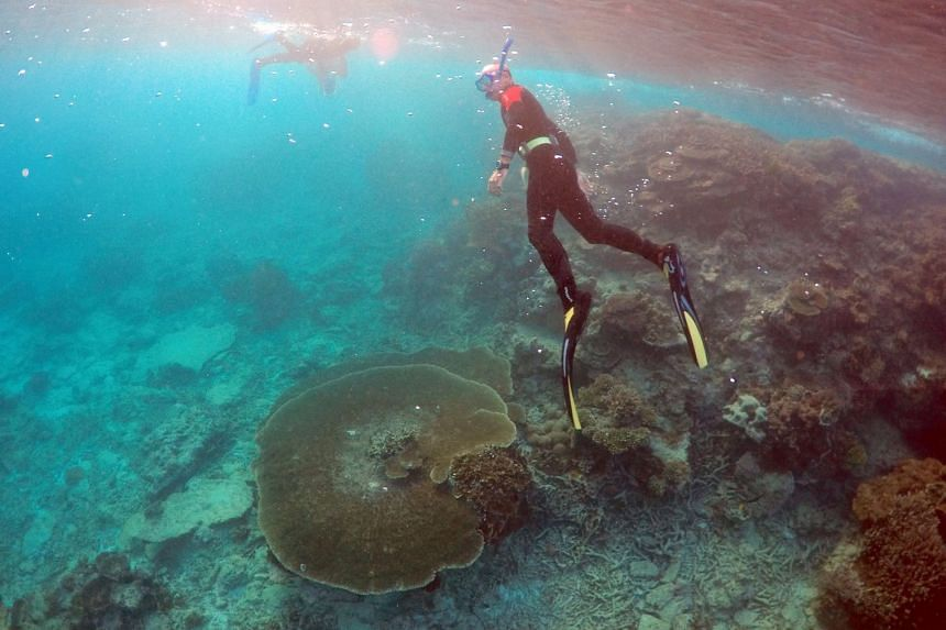 """Divers inspecting the Great Barrier Reef's condition in an area called the """"Coral Gardens"""", located at Lady Elliot Island."""
