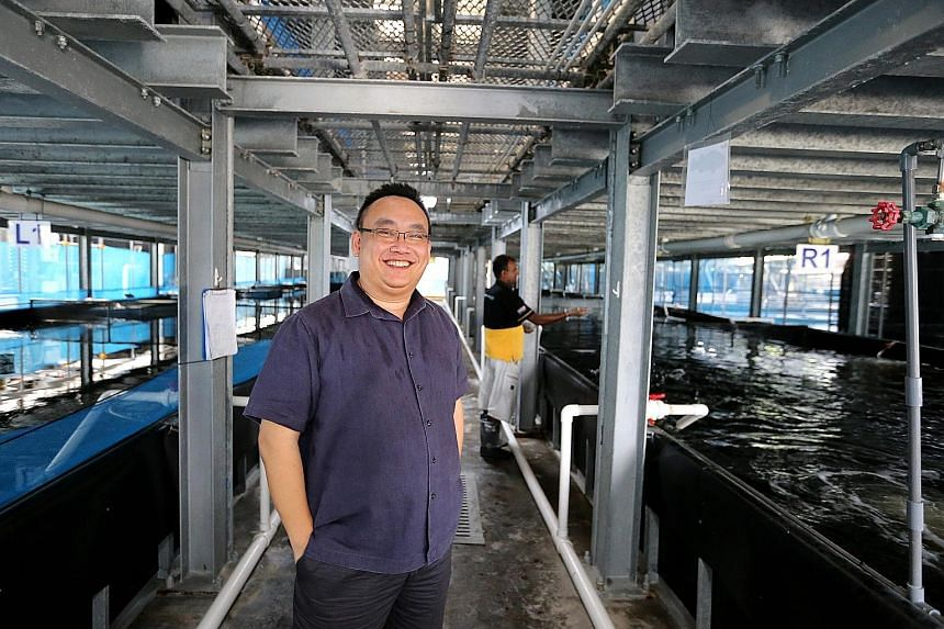 Mr Eric Ng, owner of Apollo Aquarium, is relieved to have been sold the two land parcels, as the leases on his existing fish farms are expiring. He said that the new farm will be fully automated, and yield will go up.