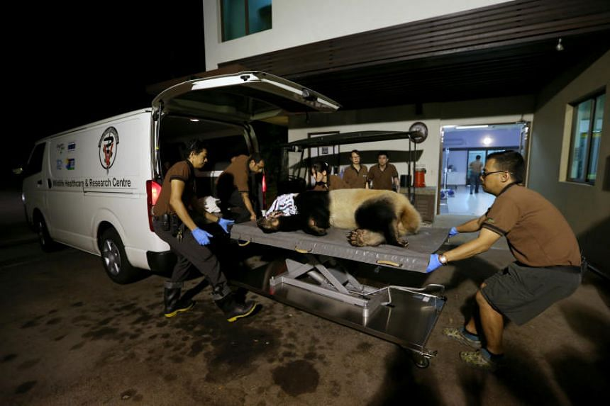 It was 8.55pm when the first patient, Kai Kai, arrived at the Singapore Zoo's clinic.