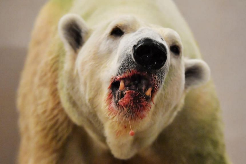 Inuka, which is 27, suffers from arthritis, dental issues and occasional ear infections.