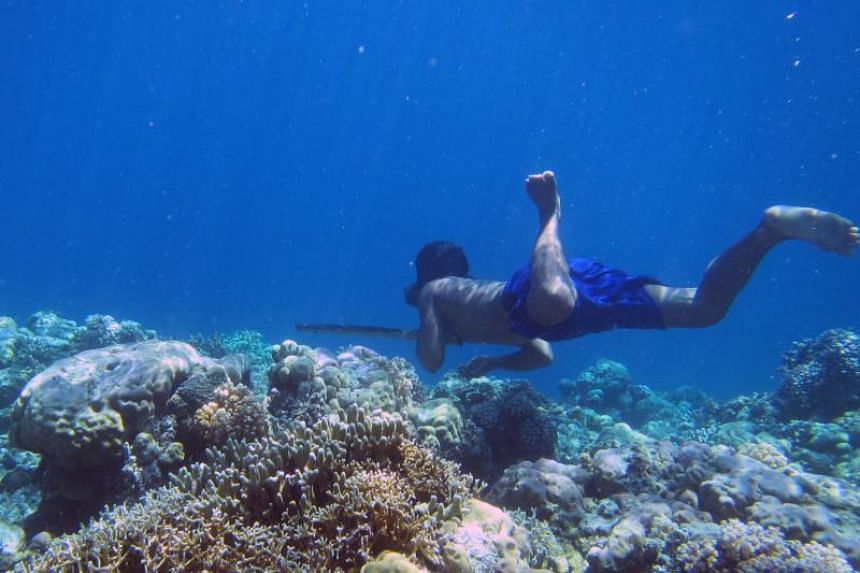 A Bajau diver hunting fish underwater using a traditional spear off the islands of Indonesia.