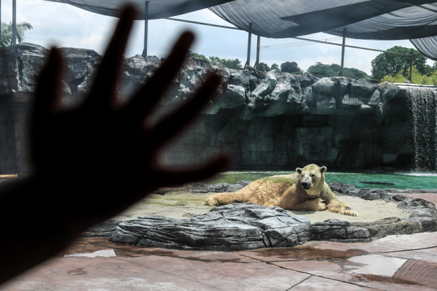 Inuka spent his entire life in Singapore. PHOTO: EPA-EFE