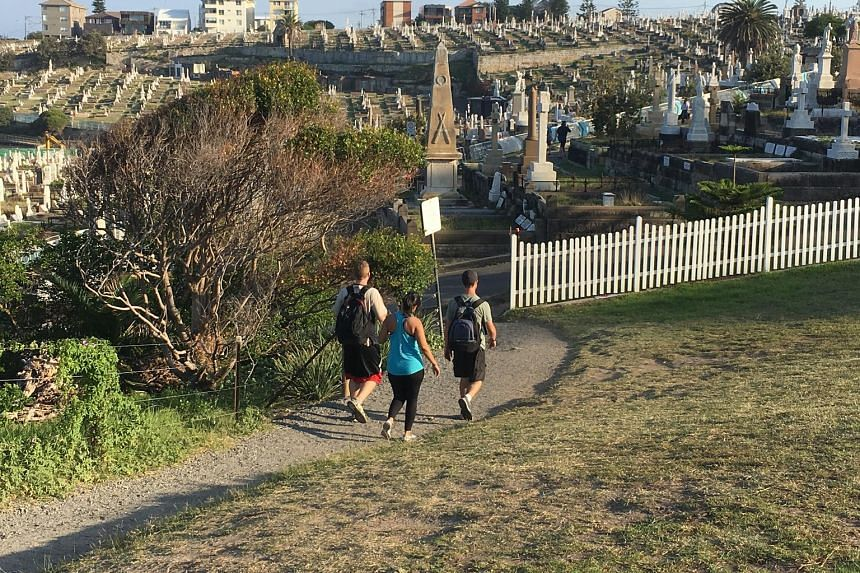 A popular coastal trail in Sydney cuts through Waverley Cemetery. Each day, thousands of people pass between the gravestones as they make their way between the beaches at Bronte and Clovelly.