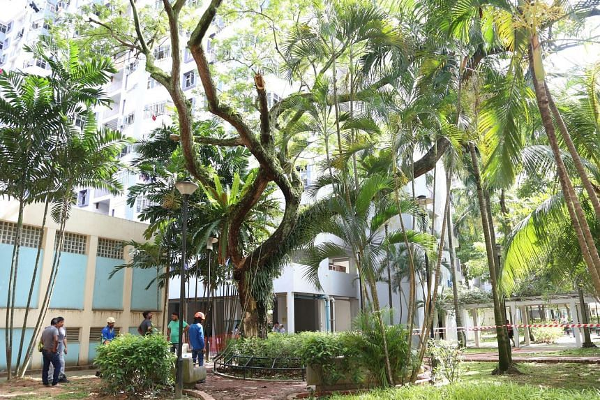 "The tree was last inspected by an arborist in December, said Jalan Besar Town Council, which oversees the area. The next inspection is scheduled for June. The town council said it has ""an active horticulture maintenance programme"" in place."