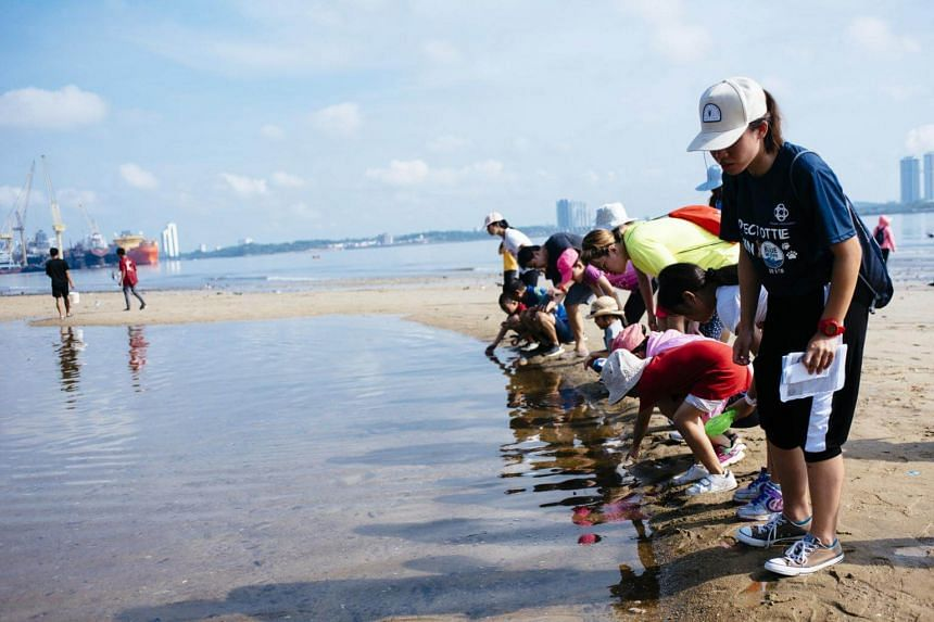 Participants exploring a tide pool during an intertidal walk at a science-themed family camp held at the People's Association's Sembawang Water-Venture.