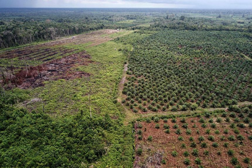 Home to the world's third-largest tropical forests, Indonesia is also the biggest palm oil producer.