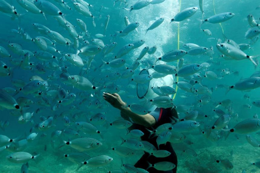 As climate change continues to heat up the oceans, many species of fish are expected to decrease in size, according to a study.