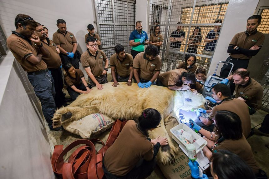 Inuka was surrounded by his current and former caregivers.