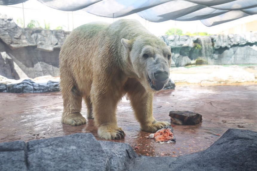 One of Inuka's caregivers said he preferred everyday objects such as tyres and rubber bins to imported toys.